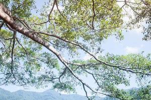 boomtakken gedurende de dag foto