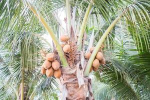 kokospalm gedurende de dag