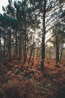 super kleurrijk bos met kleurrijke struiken