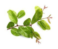 bladeren geïsoleerd op een witte achtergrond foto