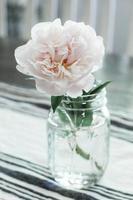 wit-petaled bloem in vaas foto