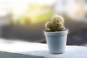 cactus in een pot met zacht licht foto