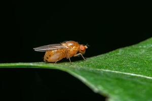 fruitvlieg op een plant