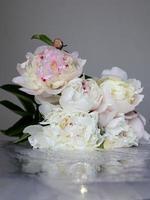 witte en roze pioenrozen foto