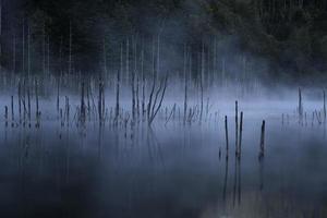 mangrovebomen in water en mist