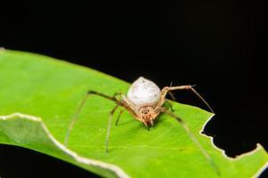 spin op een blad