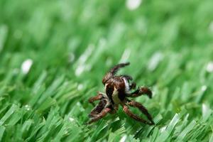 spin op het gras