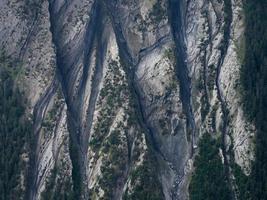 luchtfoto van bos foto