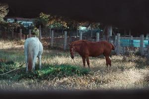 witte en bruine paarden rusten tijdens een zonnige dag