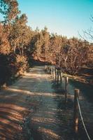 kleurrijke weg door het bos tijdens een zonnige dag