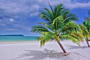 groene palmboom op wit zandstrand