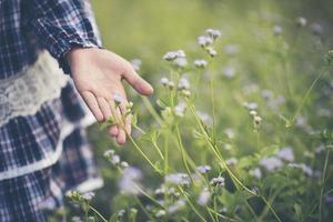 close-up van de hand van een klein meisje aanraken van wilde bloemen foto