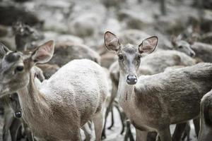 close-up van de kudde herten