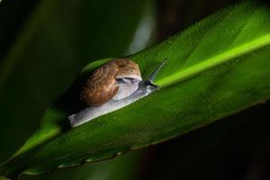 slak op groen blad