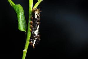 worm op een plant