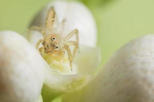 spin op een bloem