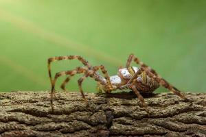 spin op een boom