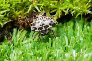 spin in het gras