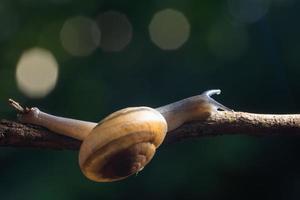 slak op een tak