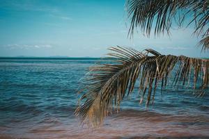 palmbomen op het strand