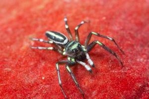 spin op rode achtergrond