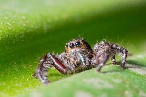 spin op een groen blad
