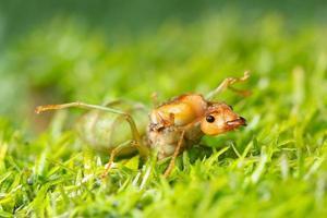 macro mieren op planten foto