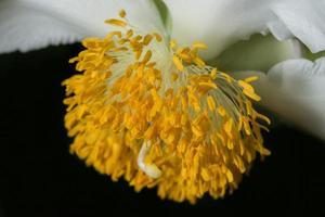 gele bloem achtergrond foto