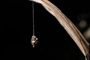 worm op een blad, close-upfoto foto