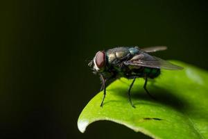 vliegen op een blad foto