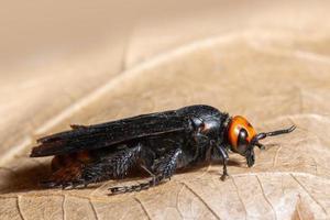 insect op droog blad