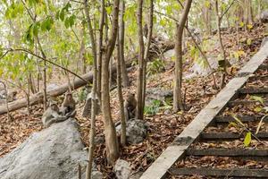 apen in het bos