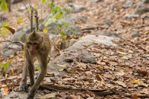 aap in het bos