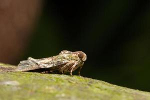 insect op een boom foto