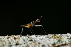 insect op een tak foto