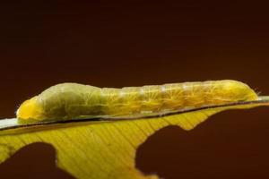 worm op een blad foto