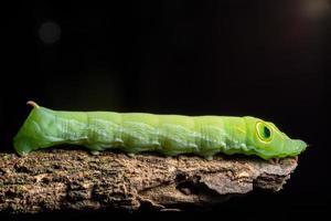 worm op een tak foto