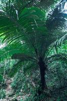 weelderige tropische bosvegetatie foto