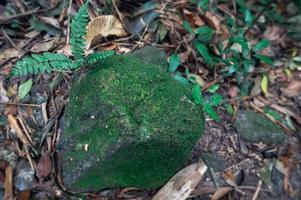 rots in het bos foto