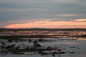zonsopgang op een vijver foto