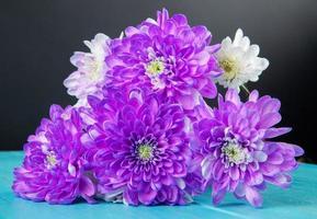 paarse en witte chrysantenbloemen foto
