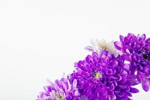 paarse en witte bloemen met kopie ruimte foto