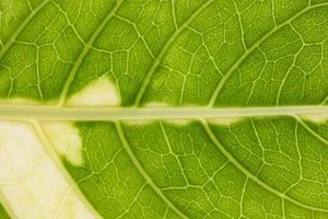 groene bladachtergrond foto