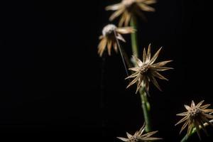Wildflower, close-upfoto
