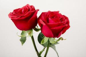 twee rode rozen op een witte achtergrond foto