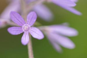 bloem close-up achtergrond