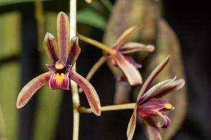 kleurrijke bloemen, close-upfoto