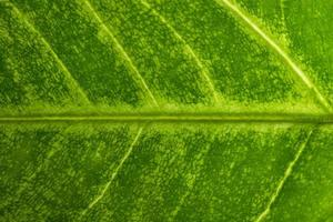 groene bladachtergrond