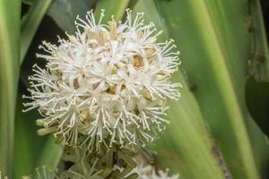witte bloem, close-upfoto