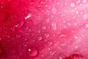 waterdruppels op bloemblaadjes
